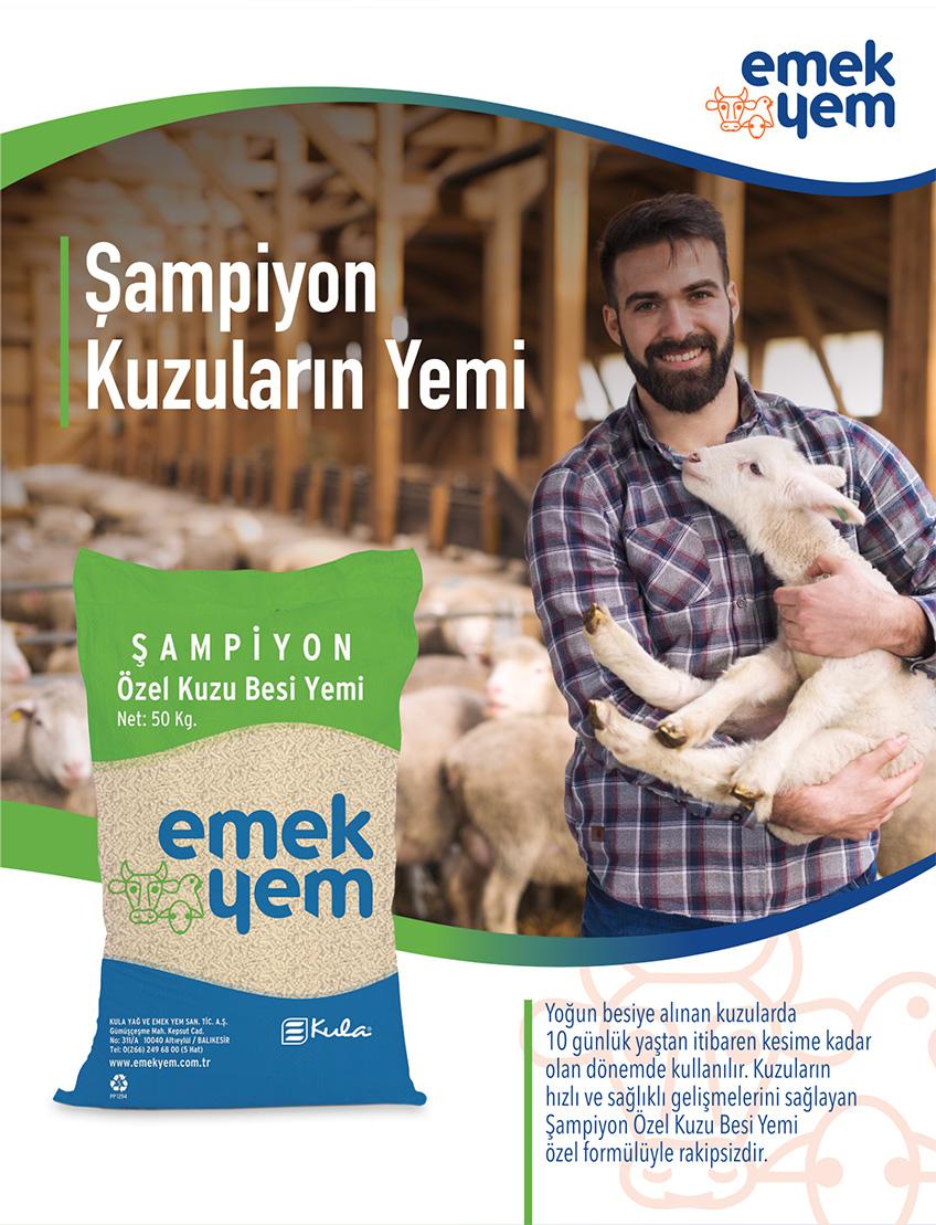 sampiyon-cover